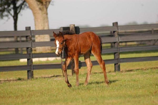 2011 Callie Foal 2