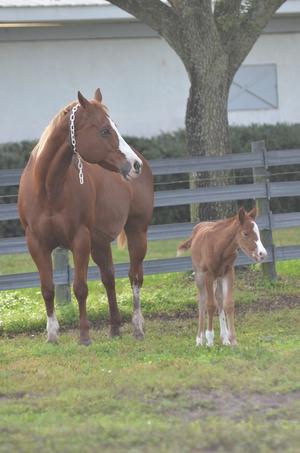 2015 Foals 12315 086