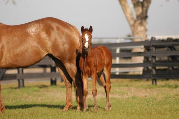 Callie foal 3