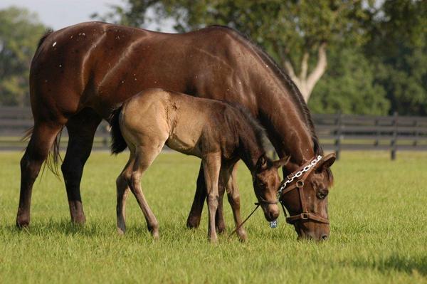 Foals  41911 040 2