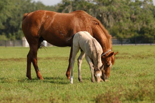 Foals  41911 052 2