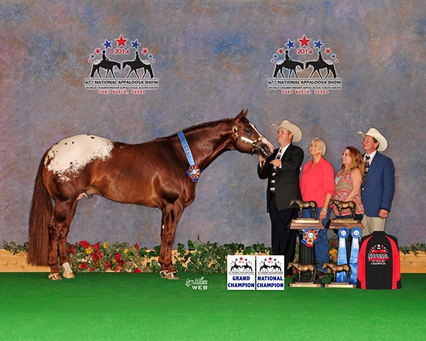 2014 National - GC Stallion 2