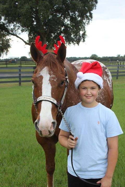 Holiday Horse Camp