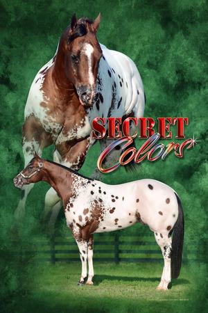 Secret Colors Poster 2012