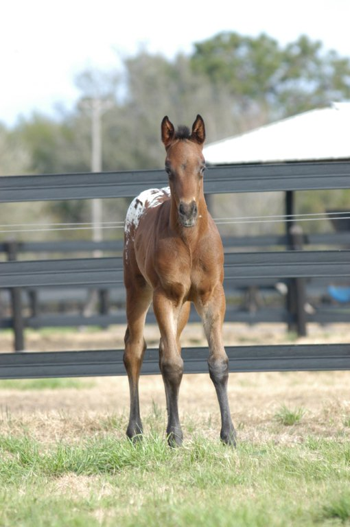 209 Foals 069 3