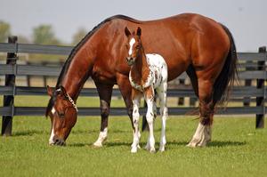 2010 Foals 32510 075